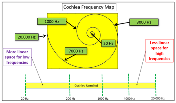 Why EQ in 1/3 octave bands? Figure 1: Frequency Map of Human Cochlea